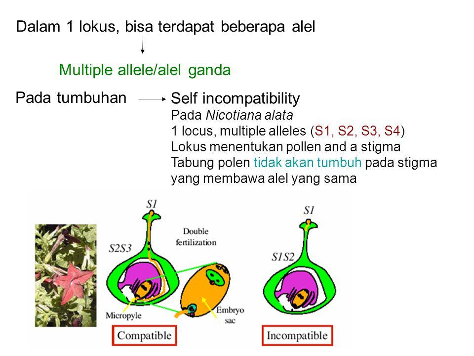 Dalam 1 lokus, bisa terdapat beberapa alel Multiple allele/alel ganda Pada tumbuhan Self incompatibility Pada Nicotiana alata 1 locus, multiple allele