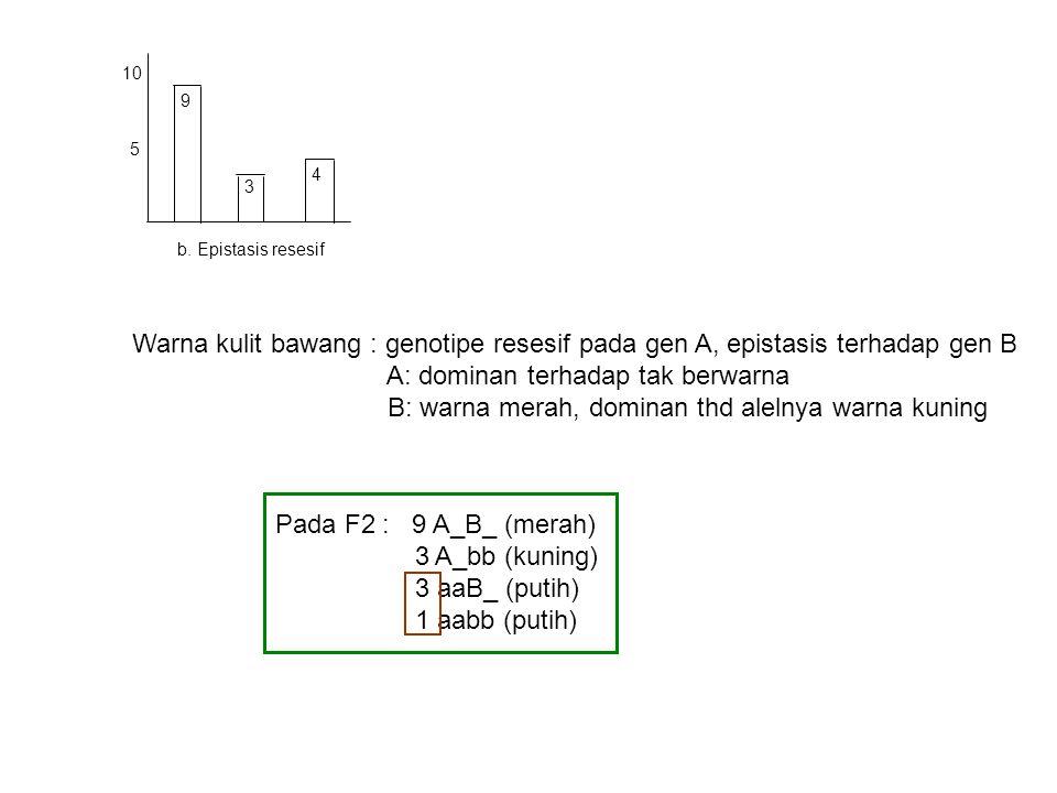 5 10 9 3 4 b. Epistasis resesif Warna kulit bawang : genotipe resesif pada gen A, epistasis terhadap gen B A: dominan terhadap tak berwarna B: warna m