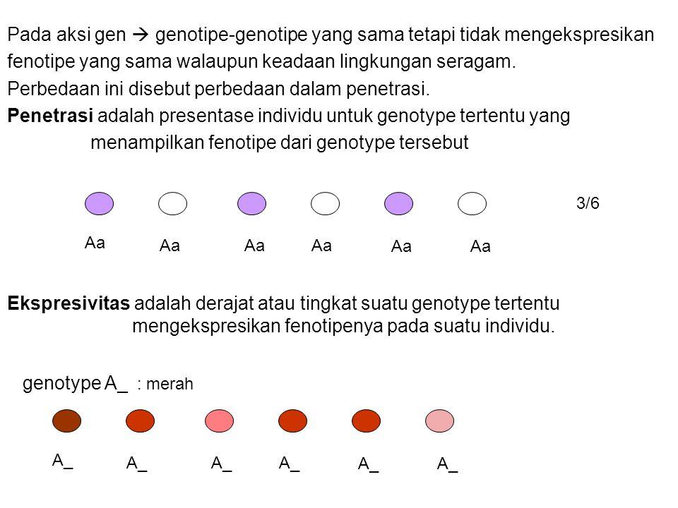 Pada aksi gen  genotipe-genotipe yang sama tetapi tidak mengekspresikan fenotipe yang sama walaupun keadaan lingkungan seragam. Perbedaan ini disebut