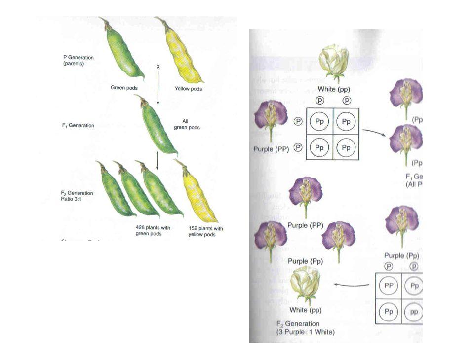 S3S3 S4S4 S1S2 S1S2 Both S 3 and S 4 Pollen Grow