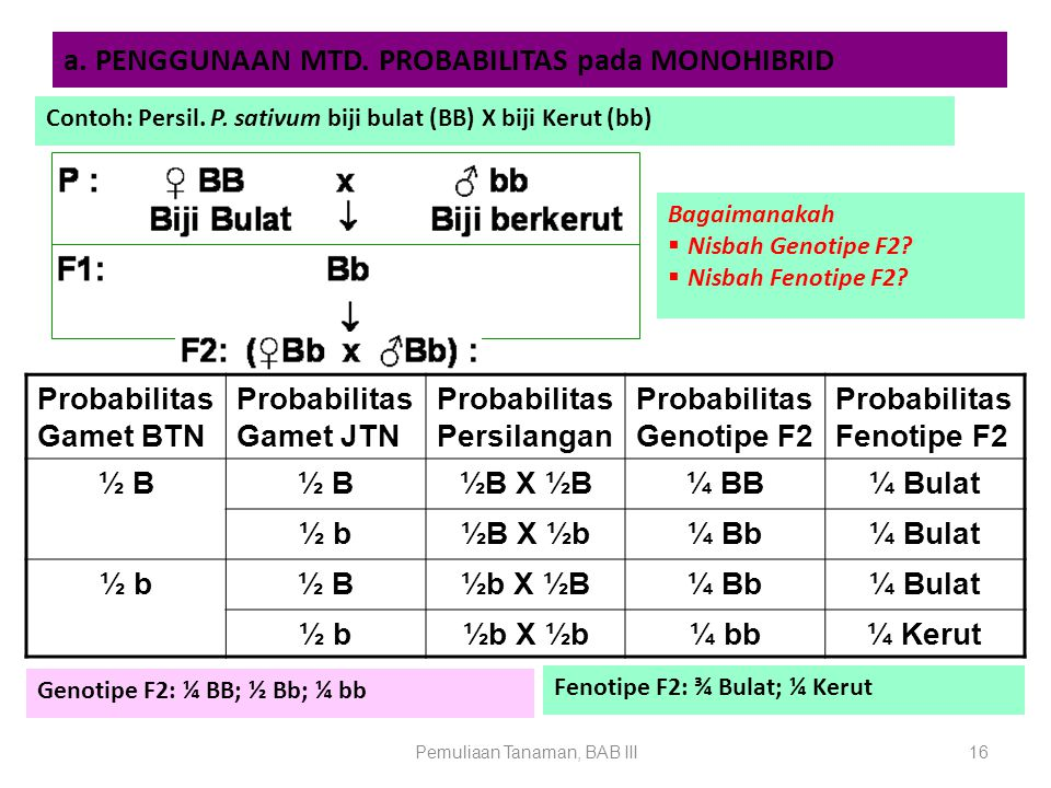 Pemuliaan Tanaman, BAB III16 a. PENGGUNAAN MTD. PROBABILITAS pada MONOHIBRID Contoh: Persil. P. sativum biji bulat (BB) X biji Kerut (bb) Probabilitas
