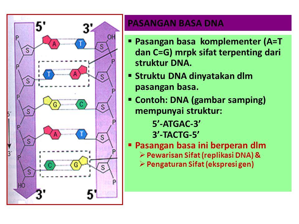 PASANGAN BASA DNA  Pasangan basa komplementer (A=T dan C=G) mrpk sifat terpenting dari struktur DNA.  Struktu DNA dinyatakan dlm pasangan basa.  Co