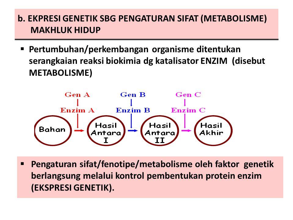b. EKPRESI GENETIK SBG PENGATURAN SIFAT (METABOLISME) MAKHLUK HIDUP  Pengaturan sifat/fenotipe/metabolisme oleh faktor genetik berlangsung melalui ko