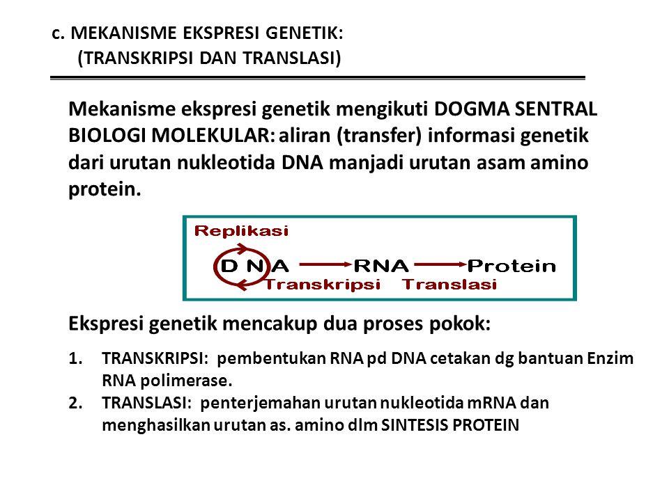 c. MEKANISME EKSPRESI GENETIK: (TRANSKRIPSI DAN TRANSLASI) 1.TRANSKRIPSI: pembentukan RNA pd DNA cetakan dg bantuan Enzim RNA polimerase. 2.TRANSLASI: