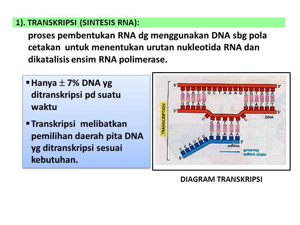 1). TRANSKRIPSI (SINTESIS RNA): proses pembentukan RNA dg menggunakan DNA sbg pola cetakan untuk menentukan urutan nukleotida RNA dan dikatalisis ensi