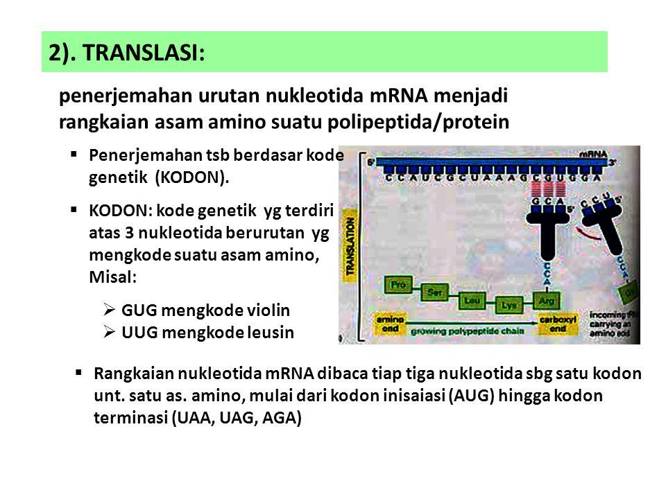 2). TRANSLASI: penerjemahan urutan nukleotida mRNA menjadi rangkaian asam amino suatu polipeptida/protein  Penerjemahan tsb berdasar kode genetik (KO