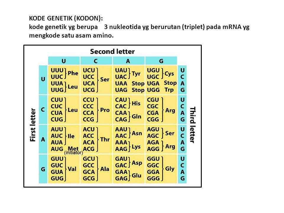KODE GENETIK (KODON): kode genetik yg berupa 3 nukleotida yg berurutan (triplet) pada mRNA yg mengkode satu asam amino.