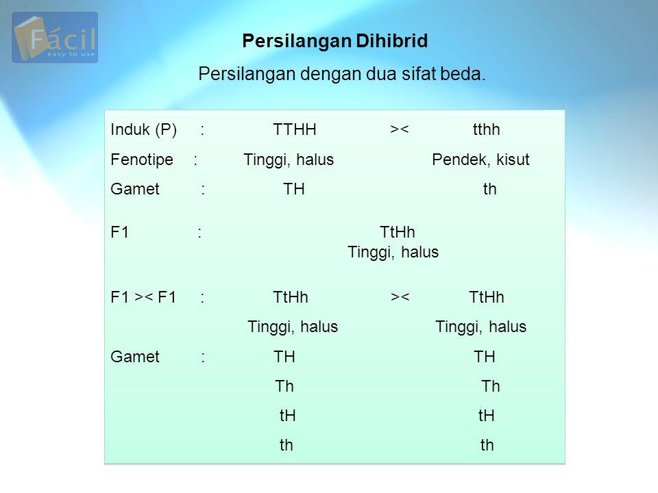 Persilangan Dihibrid Induk (P) : TTHH >< tthh Fenotipe : Tinggi, halus Pendek, kisut Gamet : TH th F1 : TtHh Tinggi, halus F1 > < TtHh Tinggi, halus T