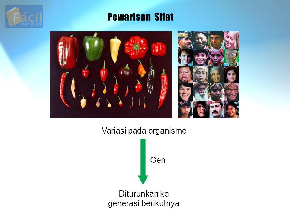 Pewarisan Sifat Variasi pada organisme Diturunkan ke generasi berikutnya Gen