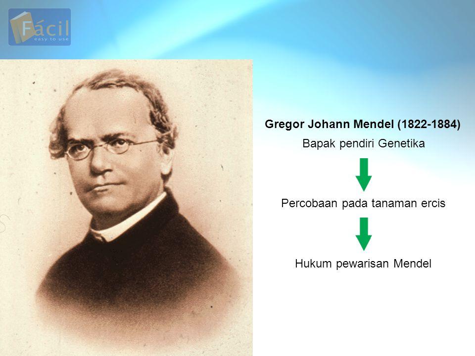 Percobaan Mendel Gregor Johann Mendel menyilangkan tanaman ercis (Pisum sativum).