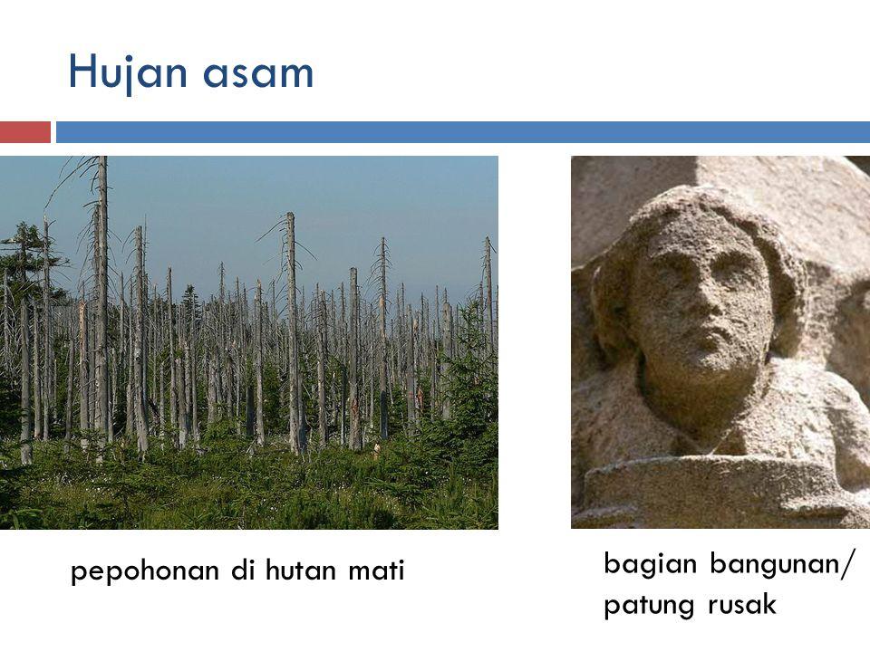 Hujan asam pepohonan di hutan mati bagian bangunan/ patung rusak