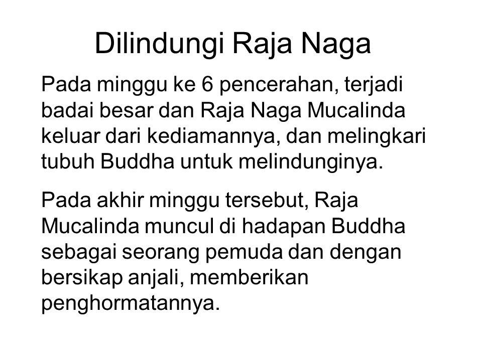 Dilindungi Raja Naga Pada minggu ke 6 pencerahan, terjadi badai besar dan Raja Naga Mucalinda keluar dari kediamannya, dan melingkari tubuh Buddha unt