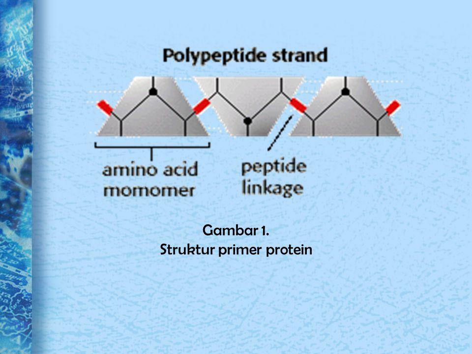 ● Struktur sekunder Struktur sekunder protein bersifat reguler, pola lipatan berulang dari rangka protein.