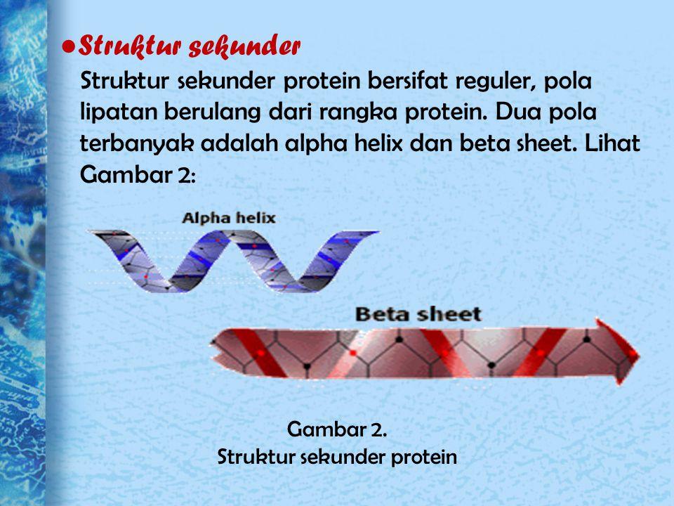 ● Struktur sekunder Struktur sekunder protein bersifat reguler, pola lipatan berulang dari rangka protein. Dua pola terbanyak adalah alpha helix dan b