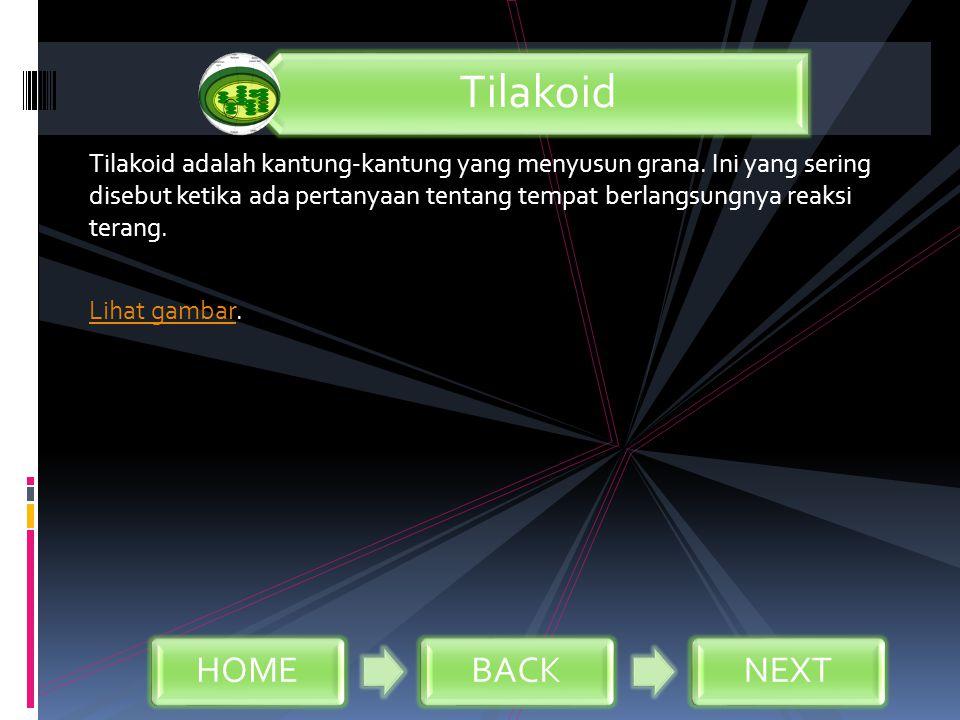 Tilakoid adalah kantung-kantung yang menyusun grana. Ini yang sering disebut ketika ada pertanyaan tentang tempat berlangsungnya reaksi terang. Lihat