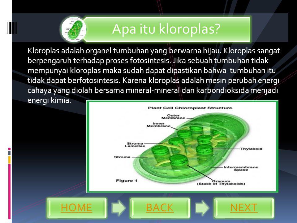 Kloroplas adalah organel tumbuhan yang berwarna hijau. Kloroplas sangat berpengaruh terhadap proses fotosintesis. Jika sebuah tumbuhan tidak mempunyai