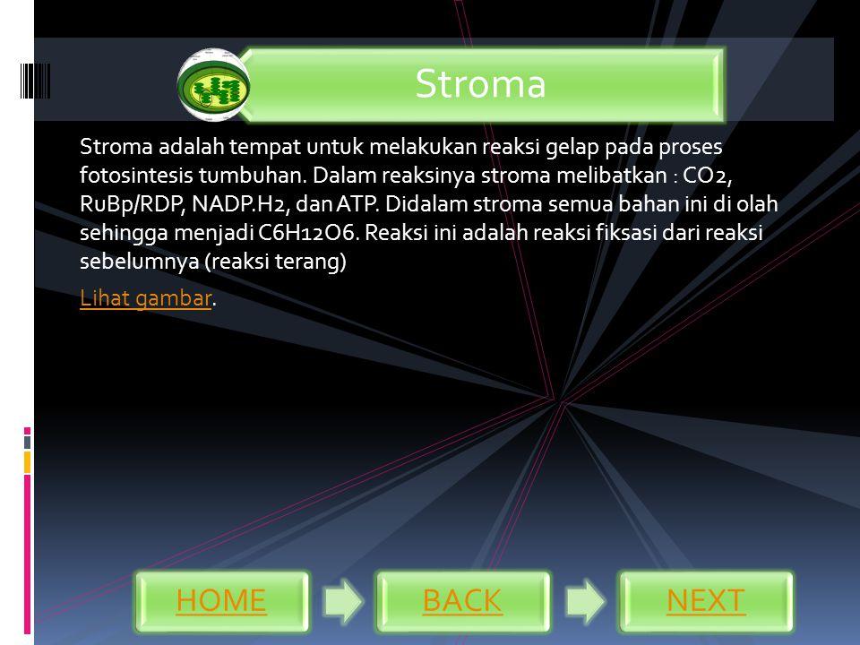Stroma adalah tempat untuk melakukan reaksi gelap pada proses fotosintesis tumbuhan. Dalam reaksinya stroma melibatkan : CO2, RuBp/RDP, NADP.H2, dan A
