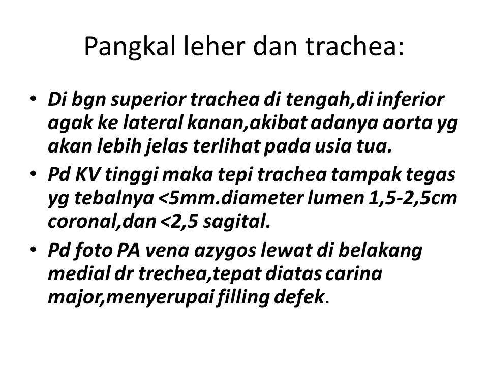 Pangkal leher dan trachea: Di bgn superior trachea di tengah,di inferior agak ke lateral kanan,akibat adanya aorta yg akan lebih jelas terlihat pada u