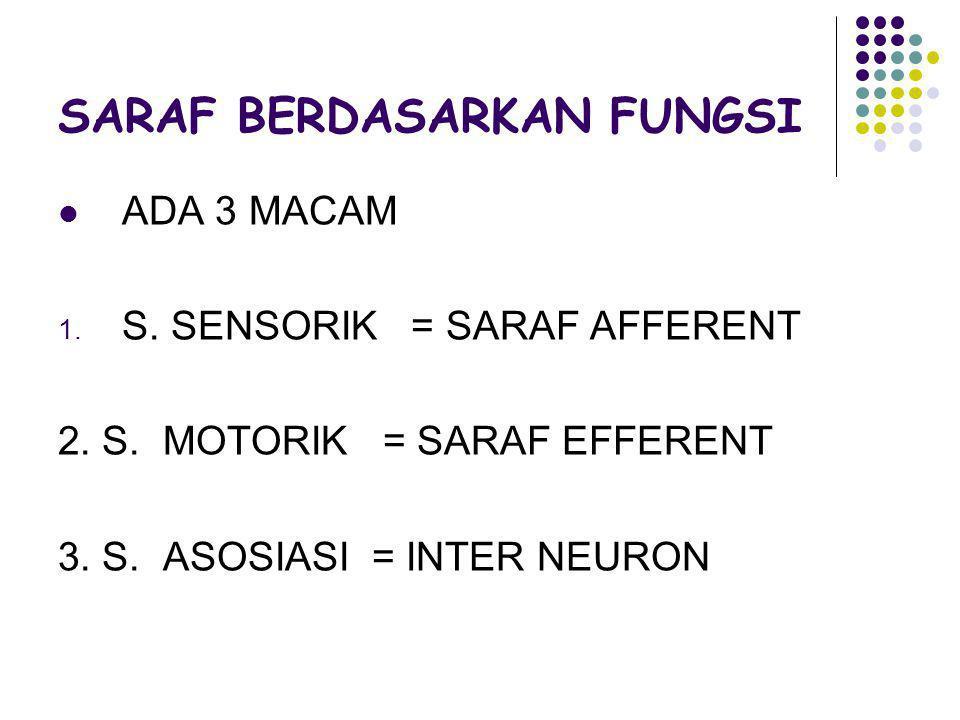 SARAF BERDASARKAN FUNGSI ADA 3 MACAM 1. S. SENSORIK = SARAF AFFERENT 2. S. MOTORIK = SARAF EFFERENT 3. S. ASOSIASI = INTER NEURON