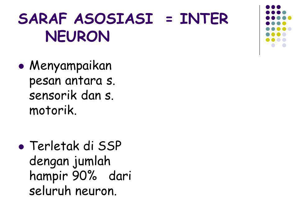 SARAF ASOSIASI = INTER NEURON Menyampaikan pesan antara s. sensorik dan s. motorik. Terletak di SSP dengan jumlah hampir 90% dari seluruh neuron.