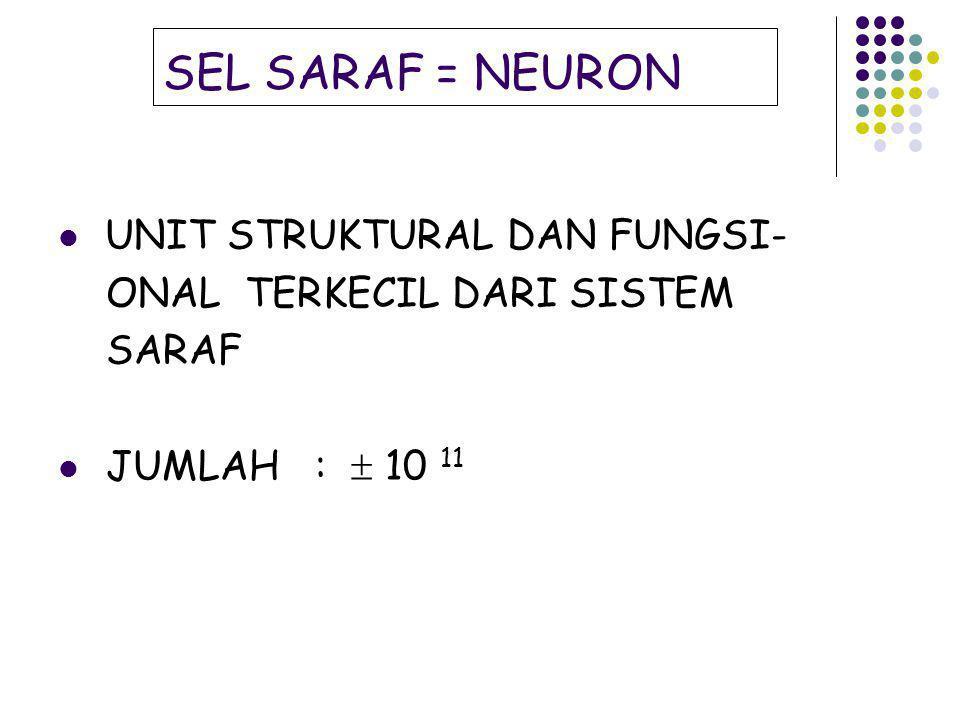 SEL SARAF = NEURON UNIT STRUKTURAL DAN FUNGSI- ONAL TERKECIL DARI SISTEM SARAF JUMLAH :  10 11