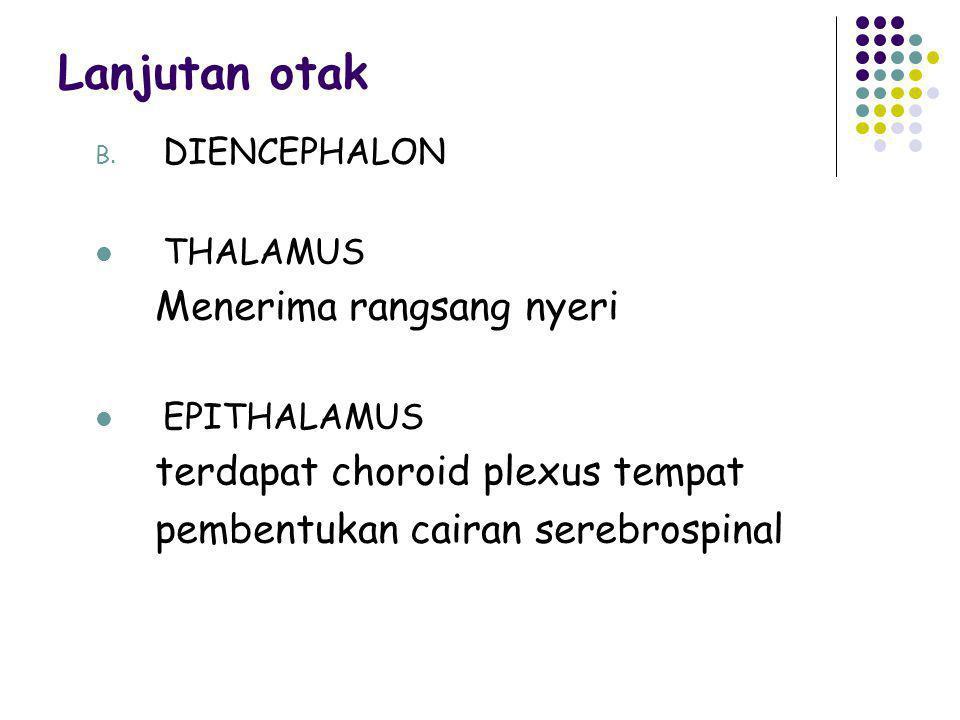 Lanjutan otak B. DIENCEPHALON THALAMUS Menerima rangsang nyeri EPITHALAMUS terdapat choroid plexus tempat pembentukan cairan serebrospinal