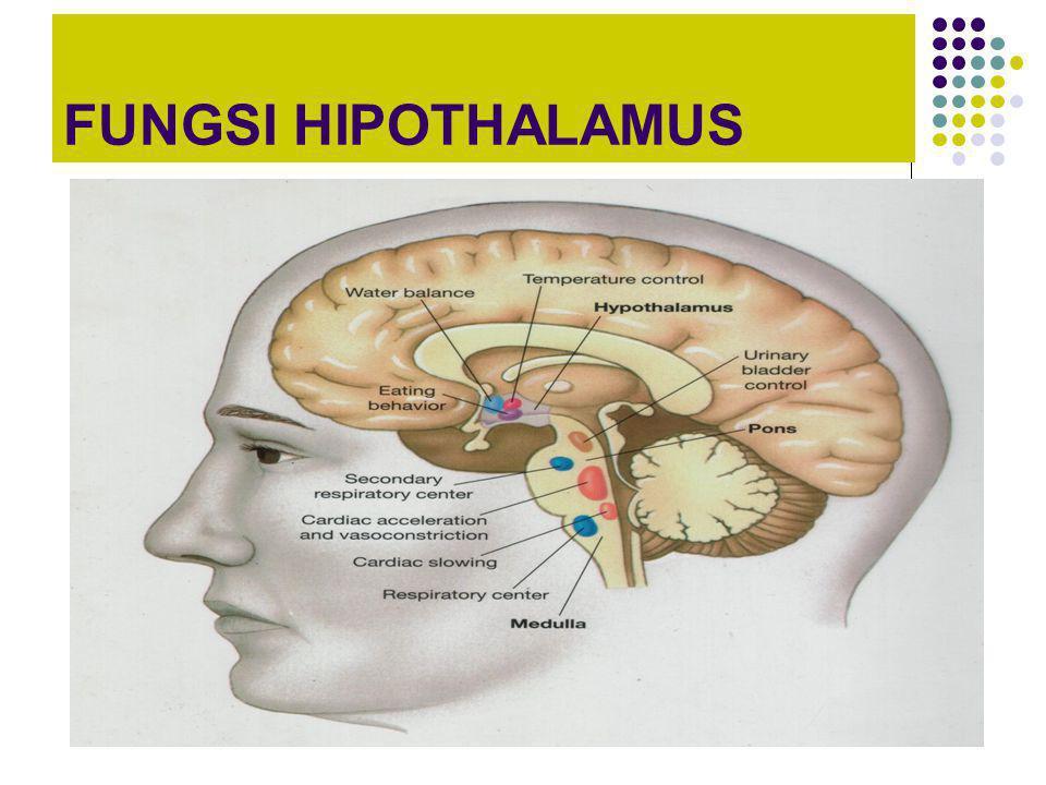 FUNGSI HIPOTHALAMUS
