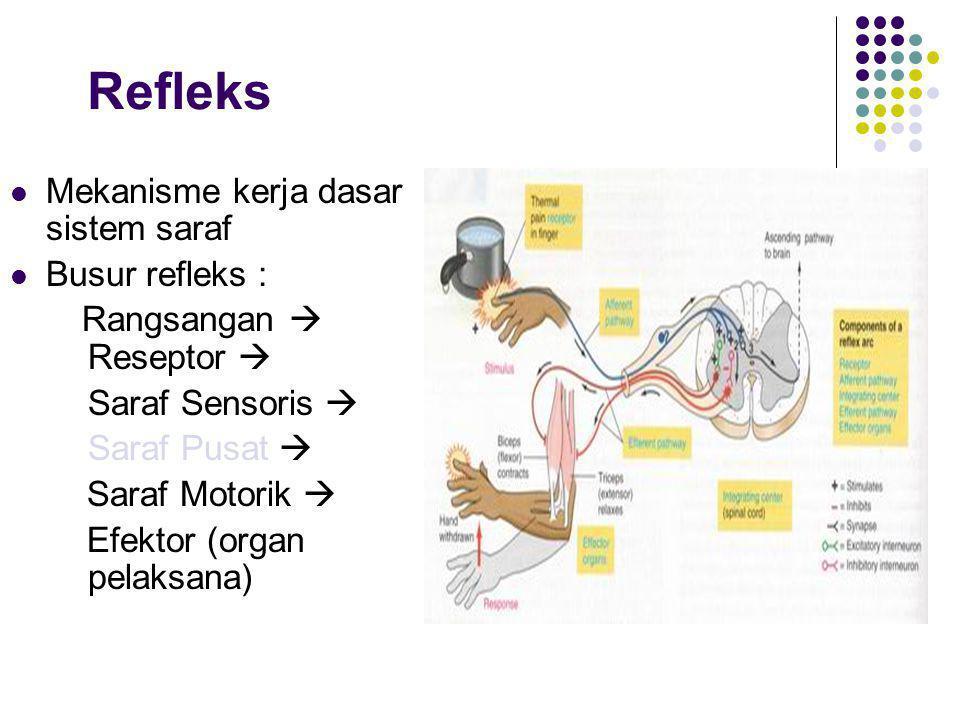 Refleks Mekanisme kerja dasar sistem saraf Busur refleks : Rangsangan  Reseptor  Saraf Sensoris  Saraf Pusat  Saraf Motorik  Efektor (organ pelak
