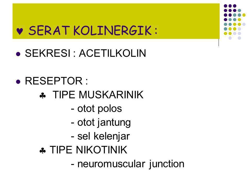 SERAT KOLINERGIK : SEKRESI : ACETILKOLIN RESEPTOR :  TIPE MUSKARINIK - otot polos - otot jantung - sel kelenjar  TIPE NIKOTINIK - neuromuscular junc
