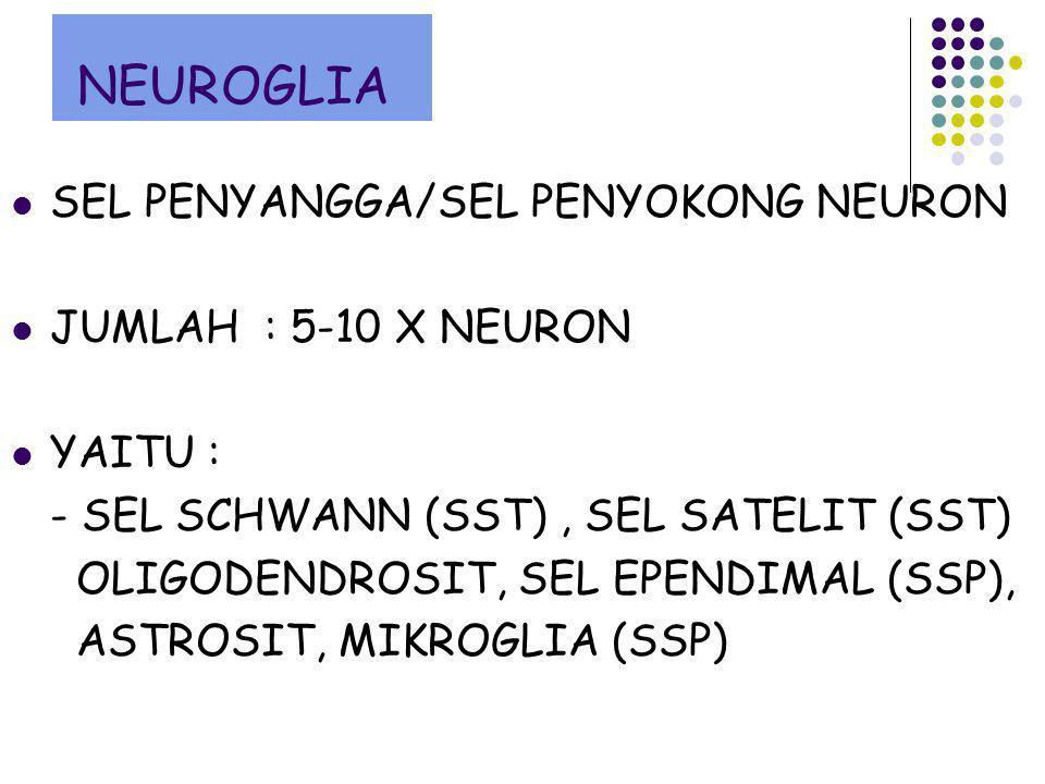 NEUROGLIA SEL PENYANGGA/SEL PENYOKONG NEURON JUMLAH : 5-10 X NEURON YAITU : - SEL SCHWANN (SST), SEL SATELIT (SST) OLIGODENDROSIT, SEL EPENDIMAL (SSP)