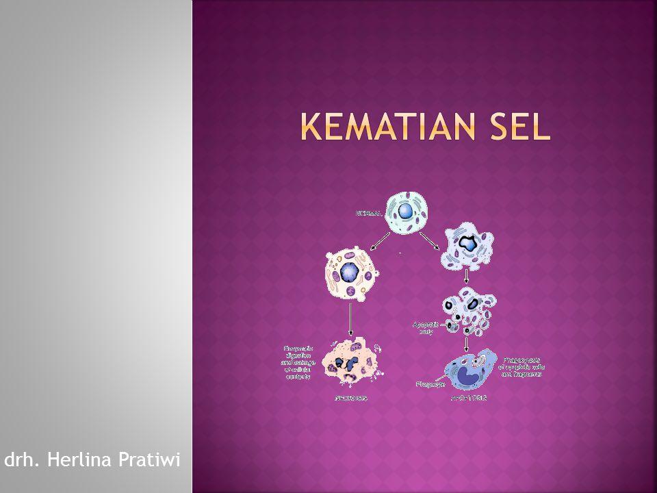  perubahan reversibel dari fenotip sel yang digantikan oleh tipe sel yang lain  Sering terjadi karena iritasi yang terjadi secara kronis.