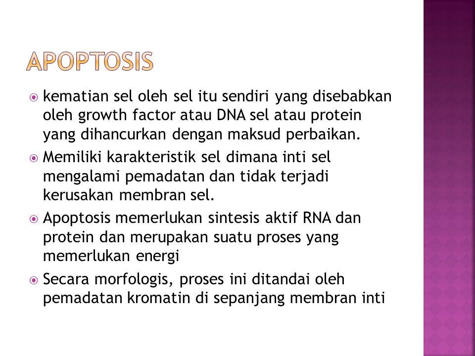  kematian sel oleh sel itu sendiri yang disebabkan oleh growth factor atau DNA sel atau protein yang dihancurkan dengan maksud perbaikan.  Memiliki