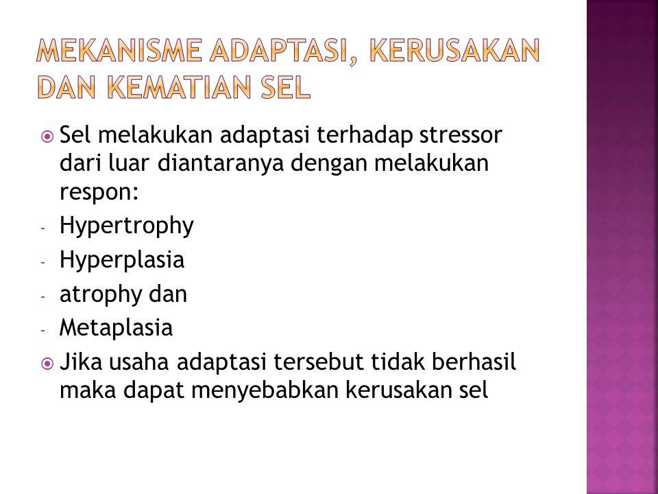  Sel melakukan adaptasi terhadap stressor dari luar diantaranya dengan melakukan respon: - Hypertrophy - Hyperplasia - atrophy dan - Metaplasia  Jika usaha adaptasi tersebut tidak berhasil maka dapat menyebabkan kerusakan sel