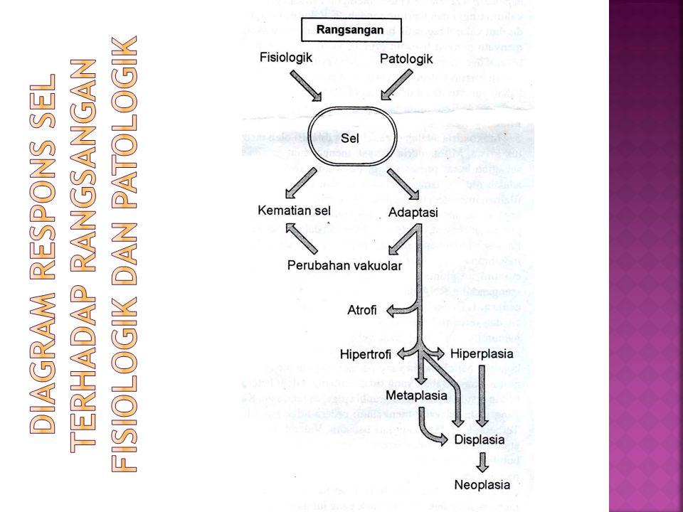  Bagi sel yang kerusakannya reversibel, maka sel itu dapat kembali berfungsi seperti sedia kala,namun bagi sel yang mengalami kerusakan secara irreversibel, maka sel itu akan mengalami kematian sel  Kematian sel dapat disebabkan oleh beberapa kejadian, diantaranya ischemia, infeksi, toksin dan reaksi imun  Kematian sel juga merupakan salah satu proses yang normal terjadi pada fase embriogenesis, perkembangan organ dan pengaturan homeostasis.