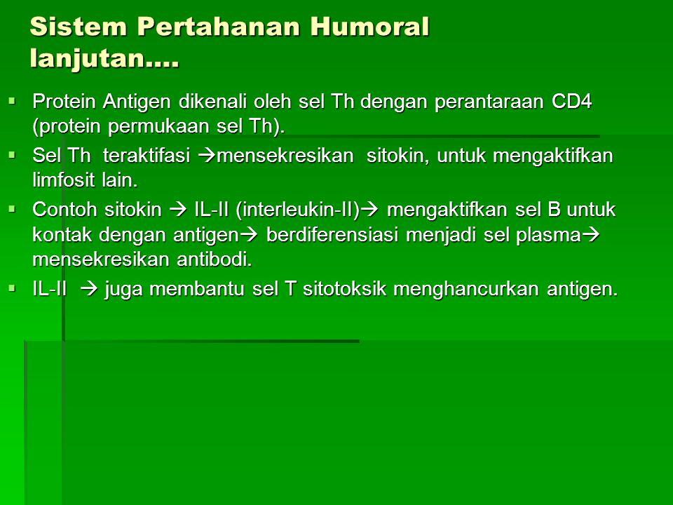 Sistem Pertahanan Humoral lanjutan….  Protein Antigen dikenali oleh sel Th dengan perantaraan CD4 (protein permukaan sel Th).  Sel Th teraktifasi 