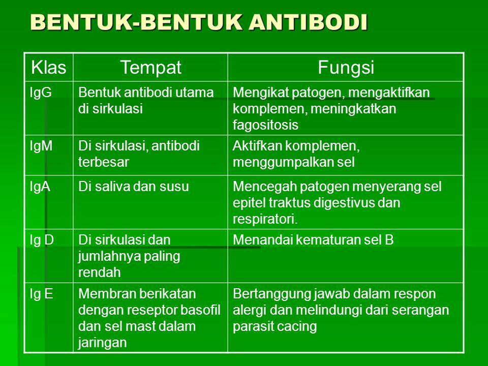 BENTUK-BENTUK ANTIBODI KlasTempatFungsi IgGBentuk antibodi utama di sirkulasi Mengikat patogen, mengaktifkan komplemen, meningkatkan fagositosis IgMDi
