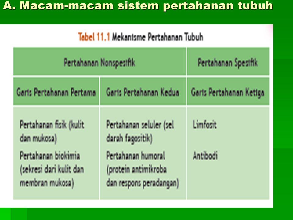Peranan sel T teraktivasi dalam sistem imunitas