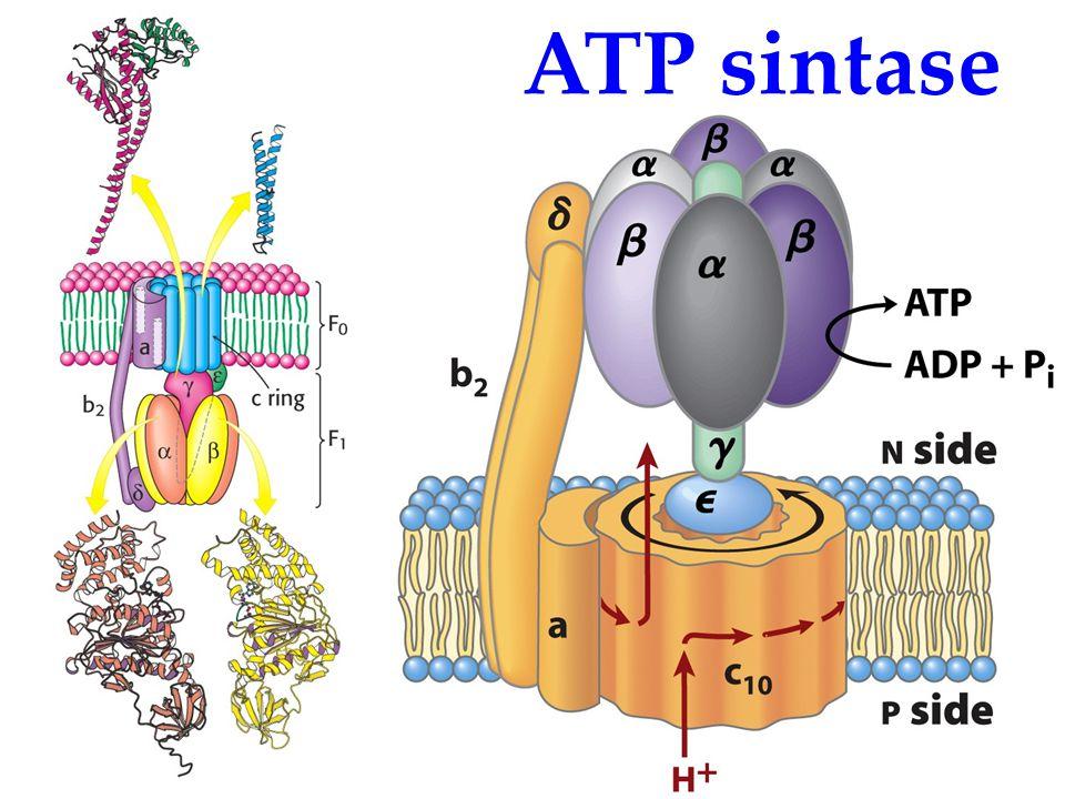 KI3061Zeily Nurachman16 ATP sintase