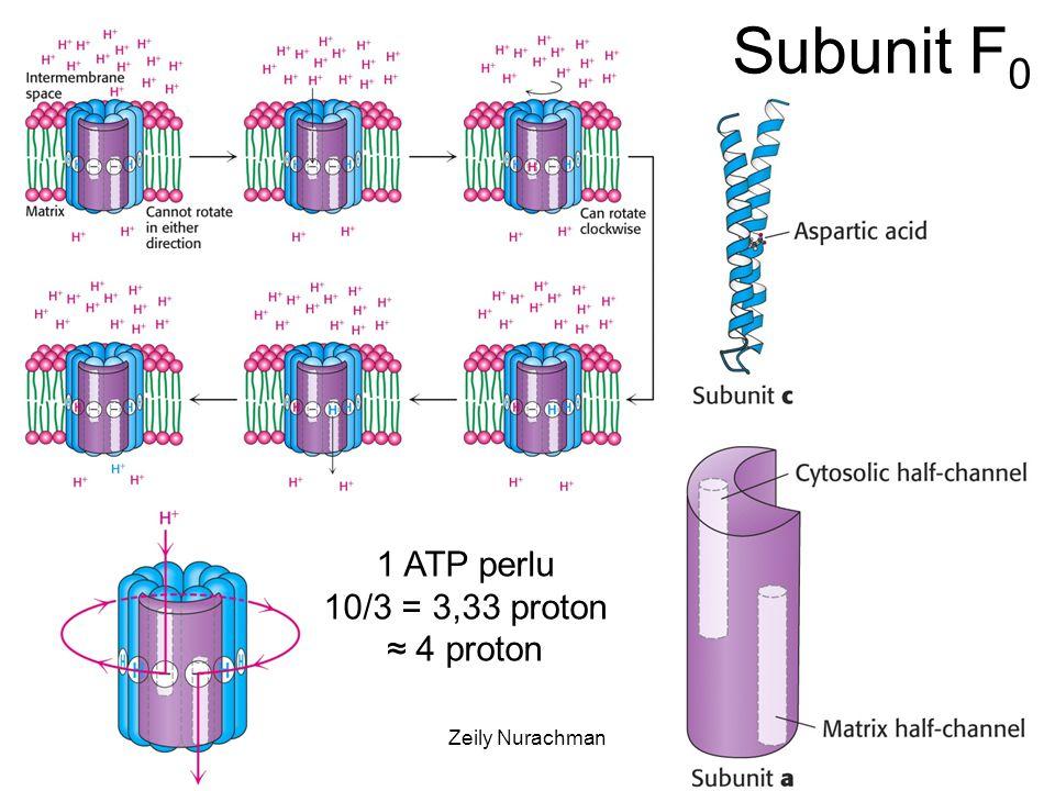KI3061Zeily Nurachman18 1 ATP perlu 10/3 = 3,33 proton ≈ 4 proton Subunit F 0