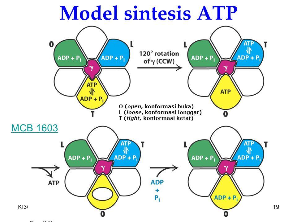 KI3061Zeily Nurachman19 Model sintesis ATP O (open, konformasi buka) L (loose, konformasi longgar) T (tight, konformasi ketat) MCB 1603