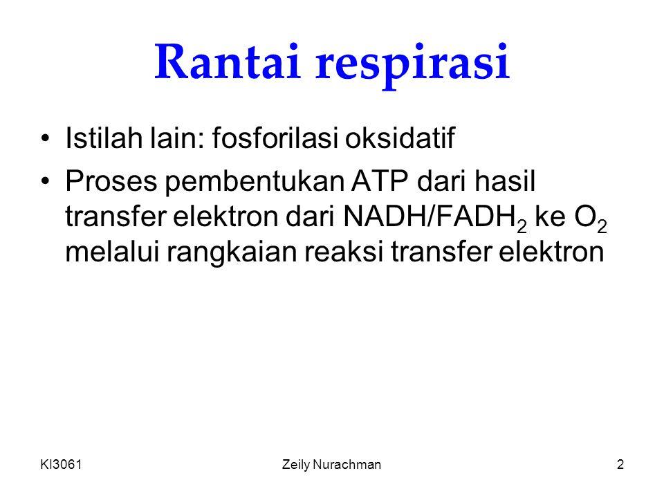 KI3061Zeily Nurachman2 Rantai respirasi Istilah lain: fosforilasi oksidatif Proses pembentukan ATP dari hasil transfer elektron dari NADH/FADH 2 ke O 2 melalui rangkaian reaksi transfer elektron
