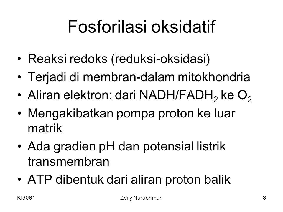 KI3061Zeily Nurachman3 Fosforilasi oksidatif Reaksi redoks (reduksi-oksidasi) Terjadi di membran-dalam mitokhondria Aliran elektron: dari NADH/FADH 2 ke O 2 Mengakibatkan pompa proton ke luar matrik Ada gradien pH dan potensial listrik transmembran ATP dibentuk dari aliran proton balik