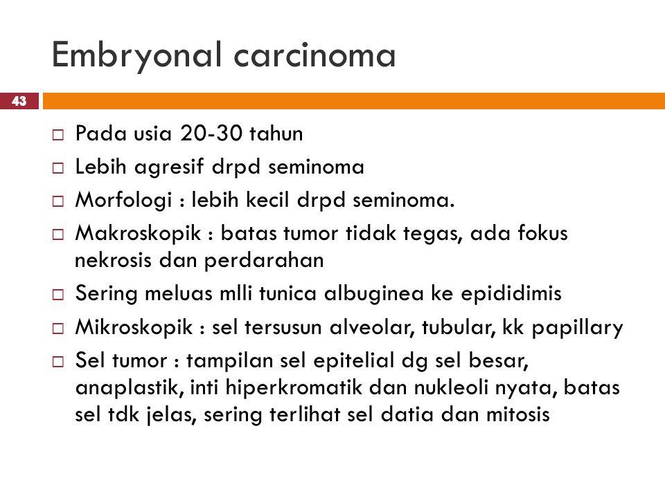 43 Embryonal carcinoma 43  Pada usia 20-30 tahun  Lebih agresif drpd seminoma  Morfologi : lebih kecil drpd seminoma.  Makroskopik : batas tumor t
