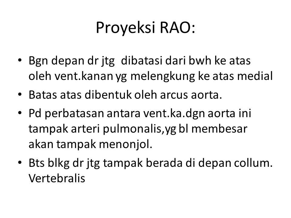 Proyeksi RAO: Bgn depan dr jtg dibatasi dari bwh ke atas oleh vent.kanan yg melengkung ke atas medial Batas atas dibentuk oleh arcus aorta. Pd perbata