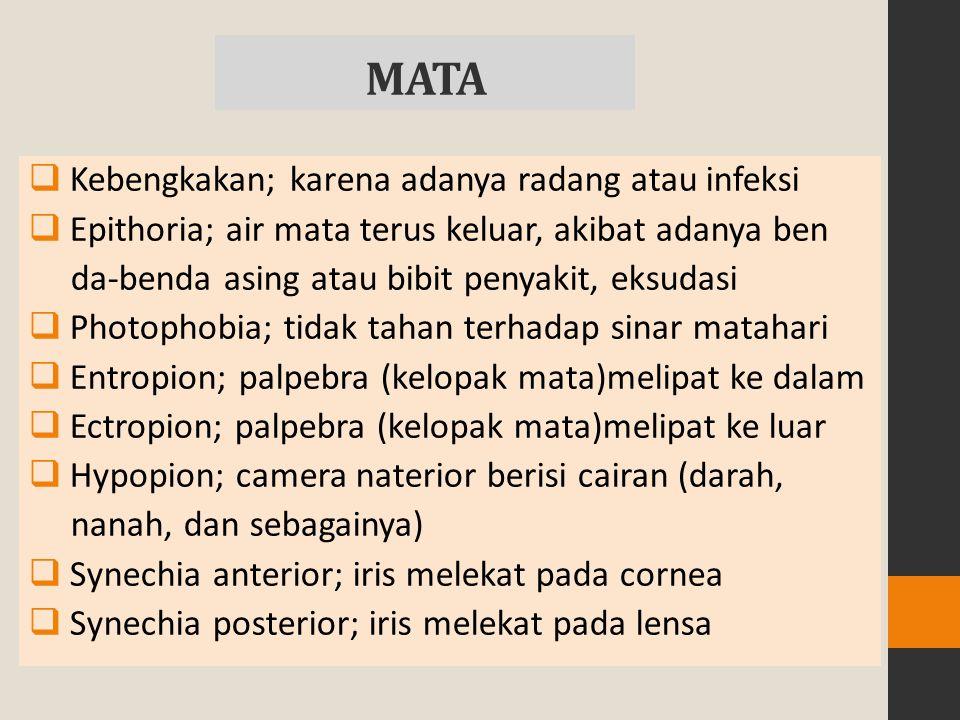 MATA  Kebengkakan; karena adanya radang atau infeksi  Epithoria; air mata terus keluar, akibat adanya ben da-benda asing atau bibit penyakit, eksudasi  Photophobia; tidak tahan terhadap sinar matahari  Entropion; palpebra (kelopak mata)melipat ke dalam  Ectropion; palpebra (kelopak mata)melipat ke luar  Hypopion; camera naterior berisi cairan (darah, nanah, dan sebagainya)  Synechia anterior; iris melekat pada cornea  Synechia posterior; iris melekat pada lensa