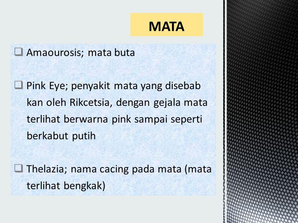  Amaourosis; mata buta  Pink Eye; penyakit mata yang disebab kan oleh Rikcetsia, dengan gejala mata terlihat berwarna pink sampai seperti berkabut putih  Thelazia; nama cacing pada mata (mata terlihat bengkak)