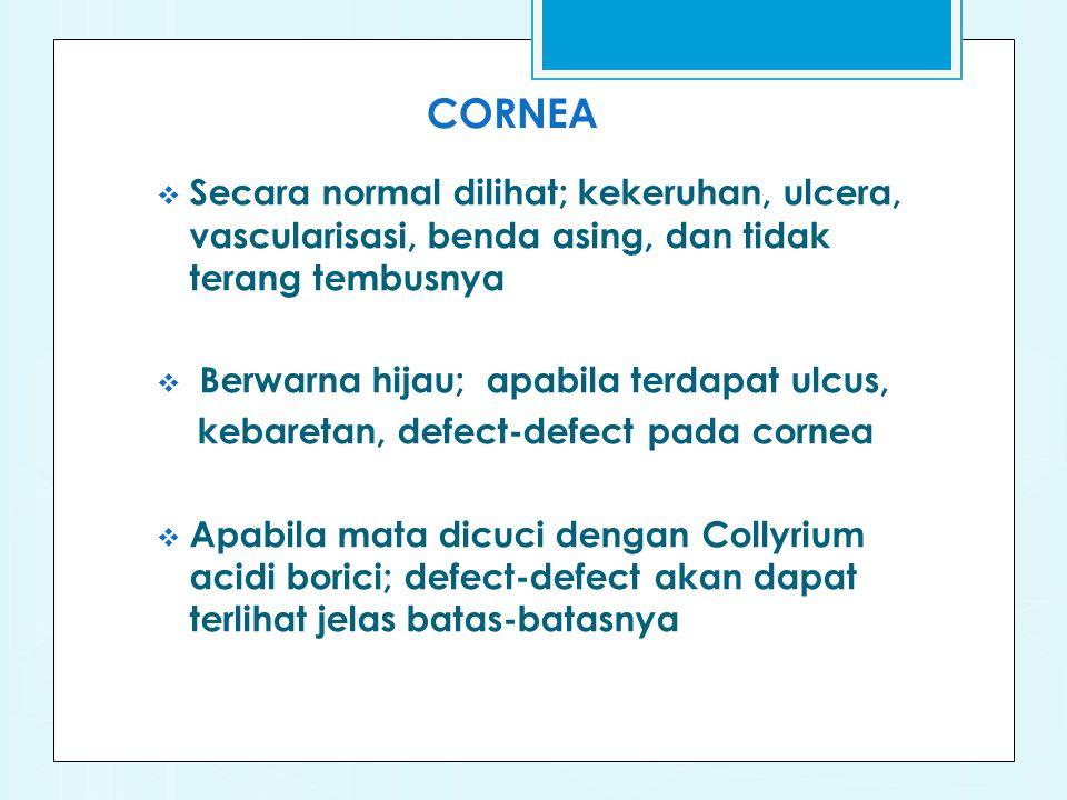 CORNEA  Secara normal dilihat; kekeruhan, ulcera, vascularisasi, benda asing, dan tidak terang tembusnya  Berwarna hijau; apabila terdapat ulcus, kebaretan, defect-defect pada cornea  Apabila mata dicuci dengan Collyrium acidi borici; defect-defect akan dapat terlihat jelas batas-batasnya