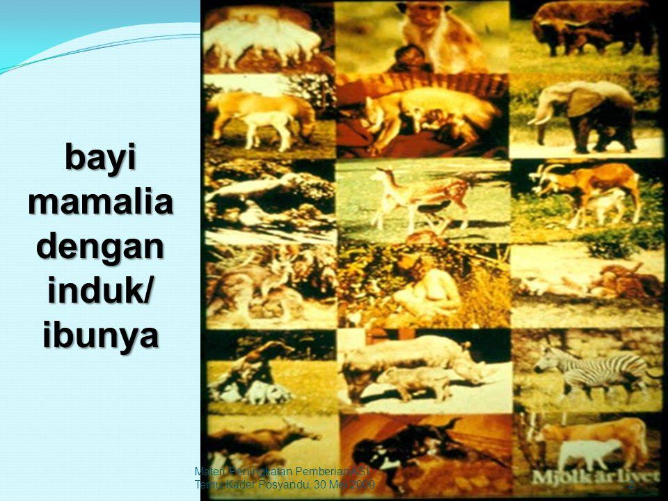 bayi mamalia dengan induk/ ibunya 2 Materi Peningkatan Pemberian ASI Temu Kader Posyandu, 30 Mei 2009