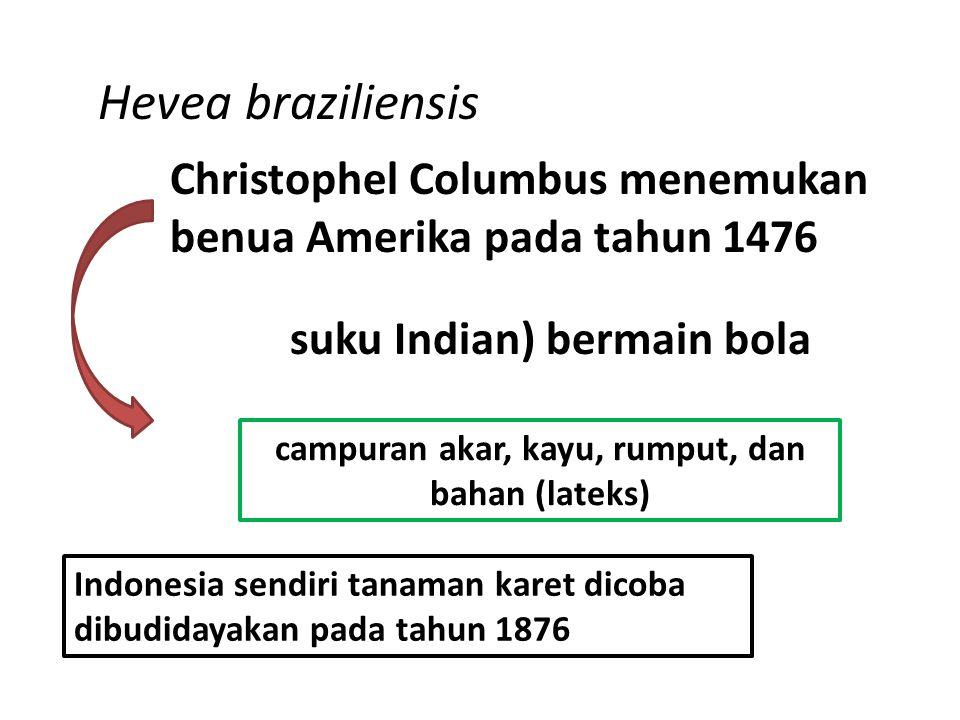 Hevea braziliensis Christophel Columbus menemukan benua Amerika pada tahun 1476 suku Indian) bermain bola campuran akar, kayu, rumput, dan bahan (lateks) Indonesia sendiri tanaman karet dicoba dibudidayakan pada tahun 1876