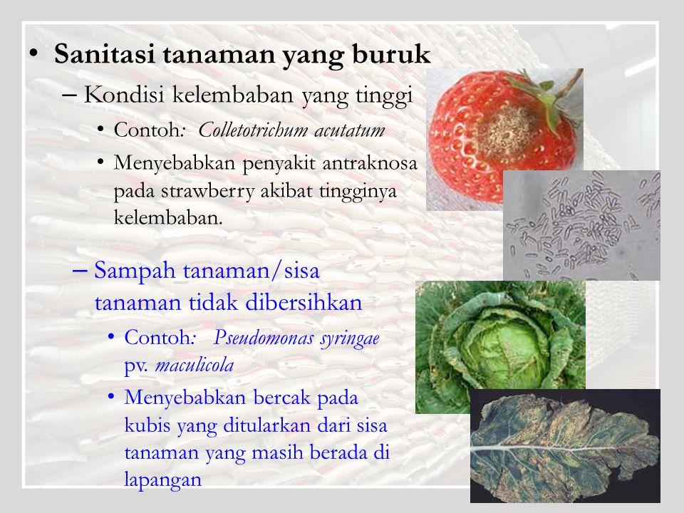 Sanitasi tanaman yang buruk – Kondisi kelembaban yang tinggi Contoh: Colletotrichum acutatum Menyebabkan penyakit antraknosa pada strawberry akibat ti